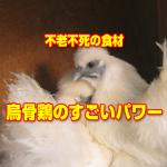 ukokkei4