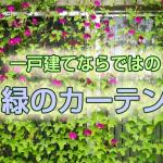 midori_curtain