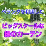 midori_curtain2