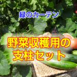 midori_curtain5