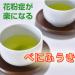 べにふうき緑茶と甜茶の花粉症効果効能!通販おすすめ粉末と茶葉